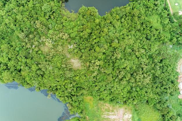 Widok z lotu ptaka trutnia strzał wierzchołek w dół zielonej lasowej pięknej pustkowie natury scenerii dla tła