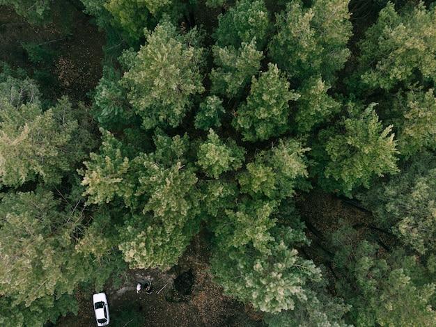 Widok z lotu ptaka wiecznie zielonego lasu pne i biały samochód. kemping na łonie natury. zrównoważone podróże lokalne. regeneracyjna ucieczka. wysokiej jakości zdjęcie