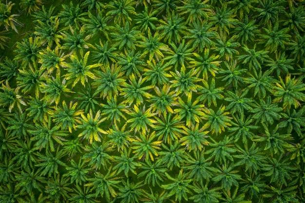 Widok z lotu ptaka wzór przemysłowej plantacji drzew palmowych