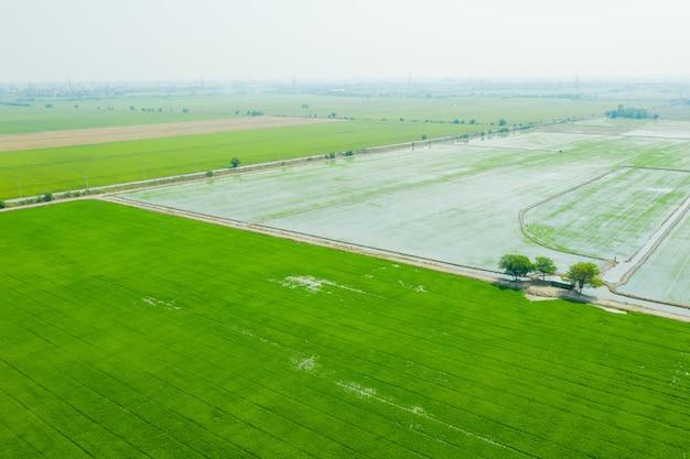 Widok z lotu ptaka z latającego drona ryżu polnego z krajobrazem zielonym tle przyrody, widok z góry ryż polny