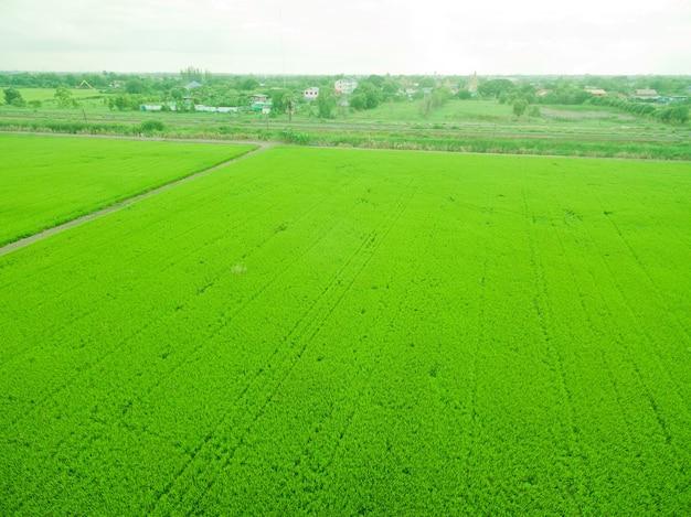 Widok z lotu ptaka z latającego drona ryżu polnego