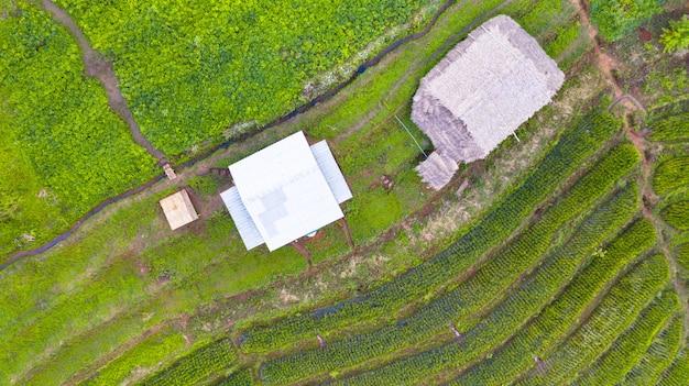 Widok z lotu ptaka zieleni tarasowaci ryżowi pola kształtuje teren różnego wzór przy rankiem w północnym thailand