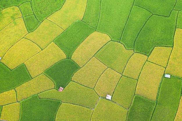 Widok z lotu ptaka zielonego i żółtego ryżu pola krajobrazu różny wzór przy rankiem w północnym thailand