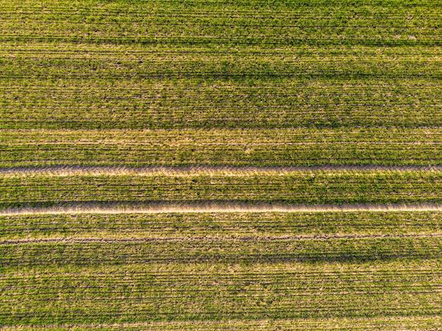 Widok z lotu ptaka zielony kraju pole z rzędem wykłada w wiośnie z świeżą roślinnością