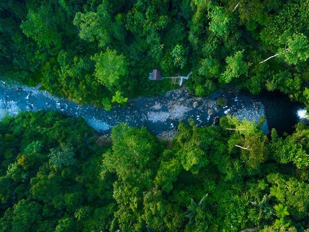 Widok z lotu ptaka zielony las w północnej bengkulu w indonezji, niesamowite światło w lesie