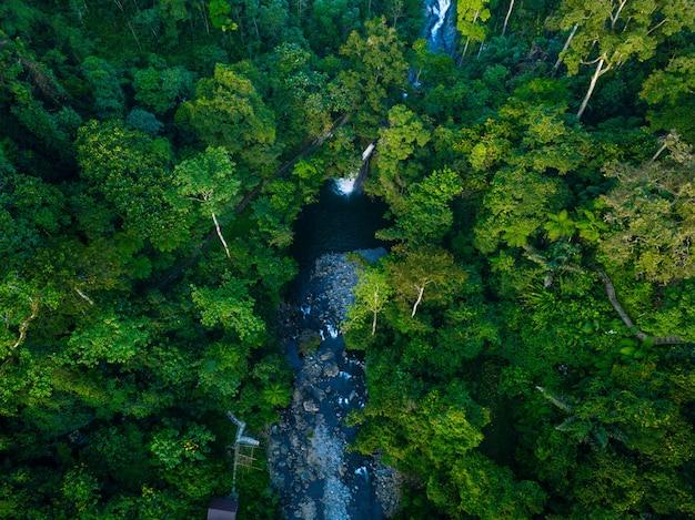 Widok z lotu ptaka zielony las w północnej bengkulu w indonezji, niesamowite światło