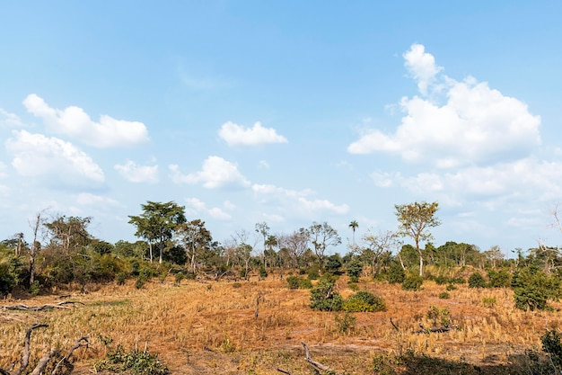 Widok z przodu afrykańskiego krajobrazu przyrody