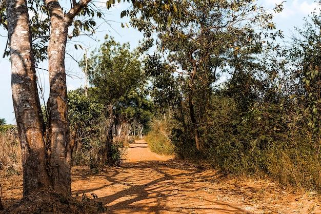 Widok z przodu afrykańskiej przyrody z drzewami i roślinnością