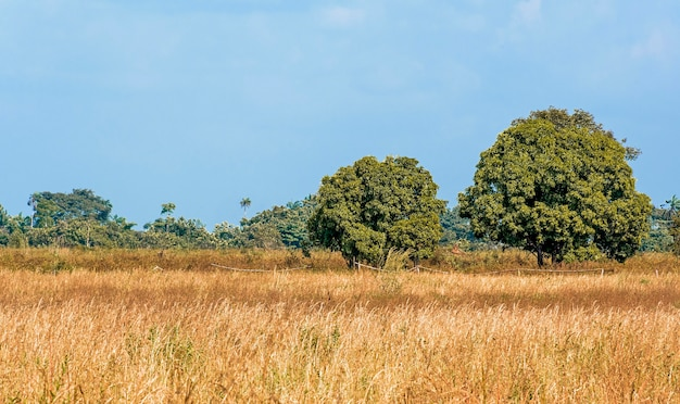 Widok z przodu afrykańskiej przyrody z drzewami