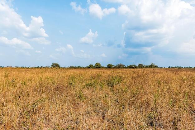 Widok z przodu afrykańskiej przyrody z roślinnością