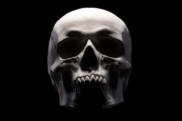 Widok z przodu gipsowego modelu ludzkiej czaszki