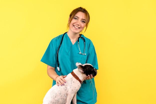 Widok z przodu kobiety lekarza weterynarii, obserwując psa na żółtej ścianie