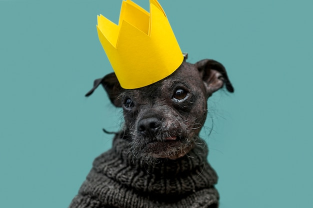 Widok z przodu koncepcji śmieszne ładny pies