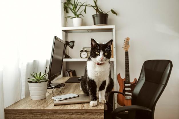 Widok z przodu kota chodzącego po biurku w pomieszczeniu
