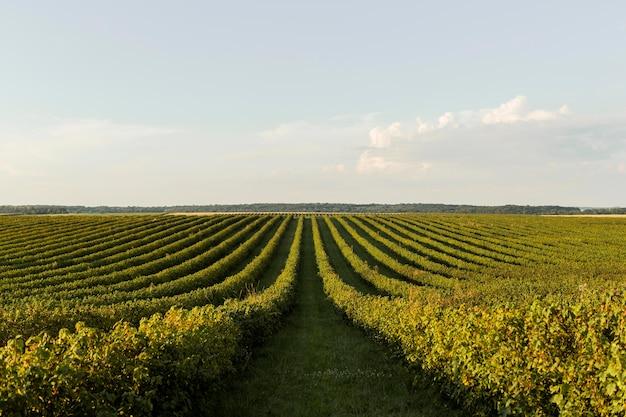 Widok z przodu krajobrazu z roślinnością i czystym niebem