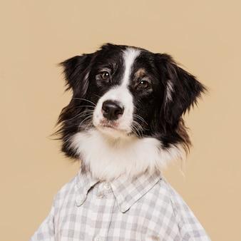 Widok z przodu ładny pies z koszuli