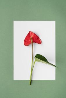 Widok z przodu minimalna kompozycja roślin tropikalnych