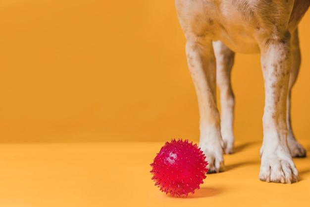 Widok z przodu nogi psa i gumowa piłka