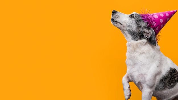 Widok z przodu pięknego psa z miejsca na kopię