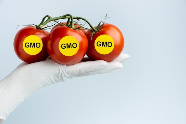 Widok z przodu pomidorów zmodyfikowanych gmo