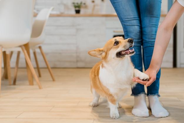 Widok z przodu psa trzymającego rękę właściciela