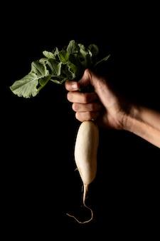 Widok z przodu ręki trzymającej białą rzodkiewkę