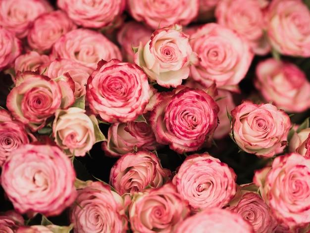 Widok z przodu romantycznych róż