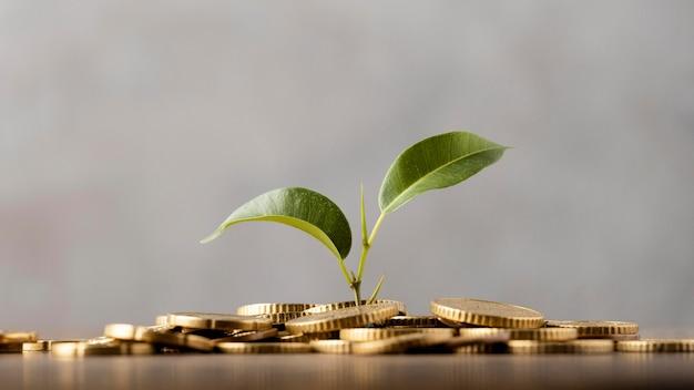 Widok z przodu rośliny wyrastającej ze złotych monet
