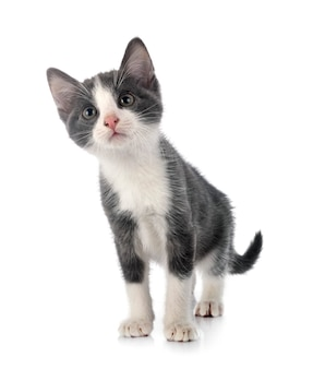 Widok z przodu ślicznego kotka