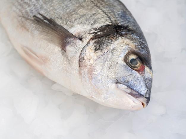 Widok z przodu świeże ryby na kostkach lodu