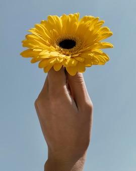 Widok z przodu układu z pięknym kwitnącym kwiatem