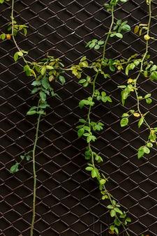 Widok z przodu zakładu na ogrodzenie ogniwa łańcucha