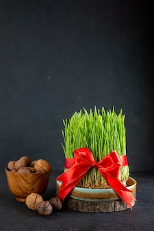 Widok z przodu zielone semeni z czerwoną kokardką i orzechami na ciemnej powierzchni