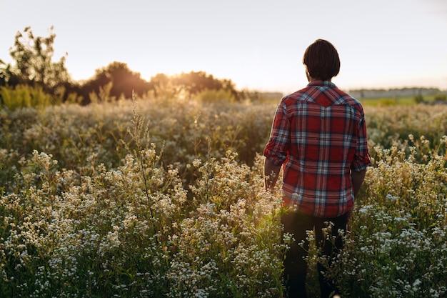 Widok z tyłu, człowiek idący po kwitnącym polu, zachód słońca z przodu