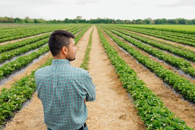 Widok z tyłu ładnego nowoczesnego młodego rolnika ze skrzyżowanymi rękami na uprawach truskawek w tle pięknych i zdrowych ludzi rolników