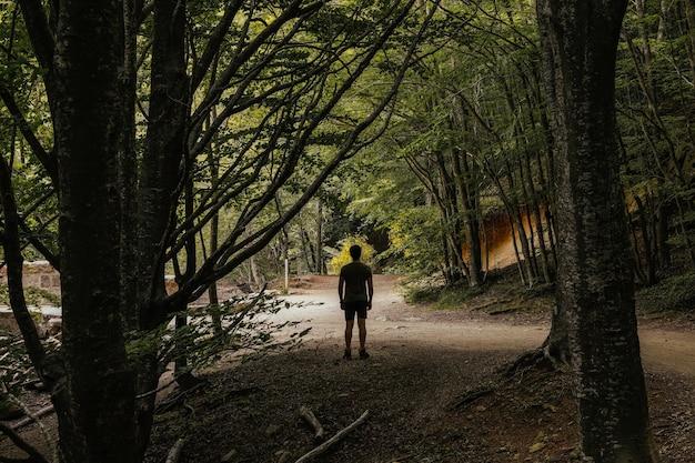 Widok z tyłu mężczyzny w środku bujnego lasu, odwracającego wzrok