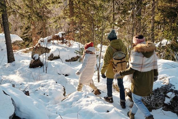 Widok z tyłu młodych przyjaciół w odzieży zimowej poruszających się do przodu w zaspie śnieżnej wśród drzew w zimowym lesie podczas relaksu lub wędrówki w weekend