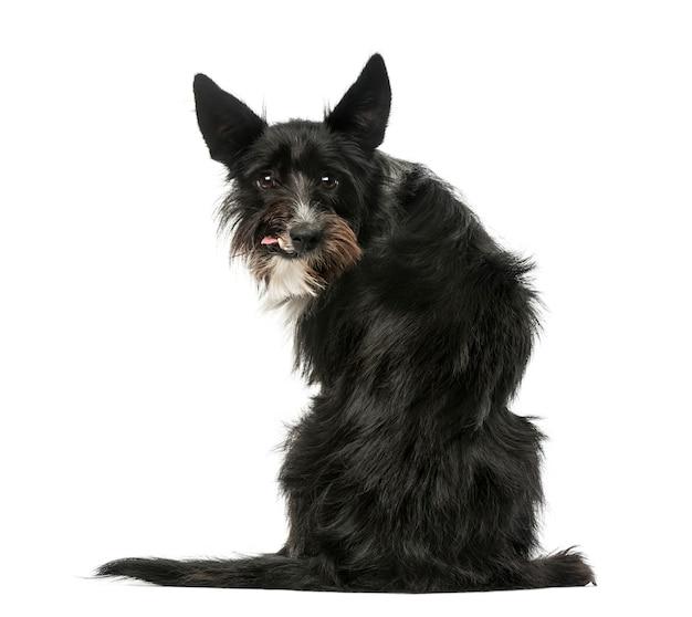 Widok z tyłu psa rasy mieszanej siedzi i patrząc do tyłu, na białym tle