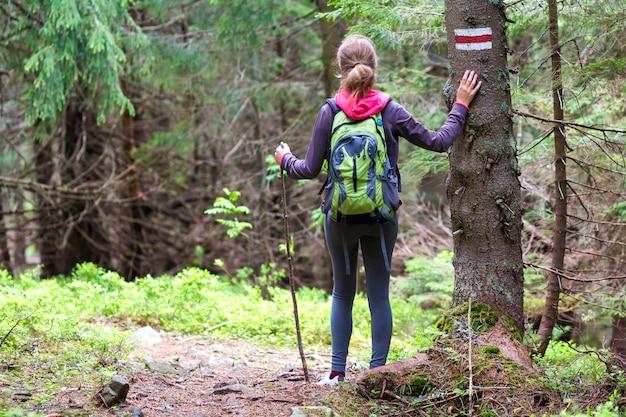 Widok z tyłu szczupła wysportowana blond turysta dziewczyna z kijem i plecak idąc przez oświetlone słońcem gęsty wiecznie zielony las sosnowy. koncepcja turystyki, podróży, turystyki i zdrowego stylu życia.