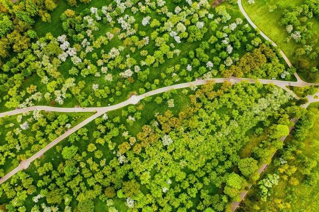 Widok z wysokości parku łoszyckiego w mińsku, wijące się ścieżki w parku łoszickim, białoruś, sad jabłkowy.