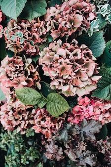 Widok zbliżenie kwiatów hortensji