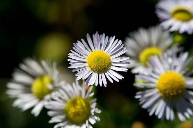 Widok zbliżenie kwitnący kwiat lato z niewyraźne tło.