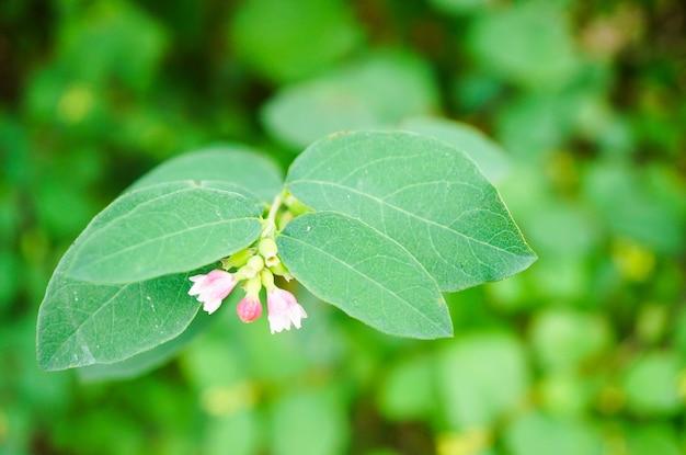 Widok zbliżenie maleńkich dzwonków z zielonymi liśćmi na niewyraźne tło