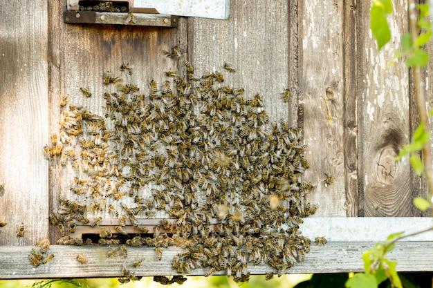 Widok zbliżenie pszczół pracujących