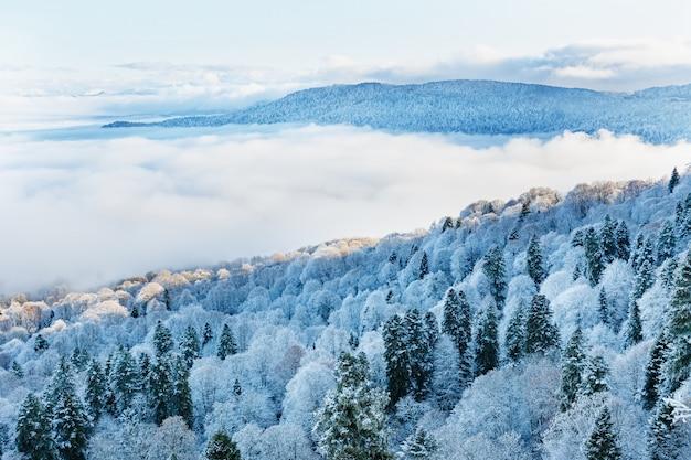 Widok ze szczytu ośnieżonego lasu z nisko unoszącymi się chmurami.