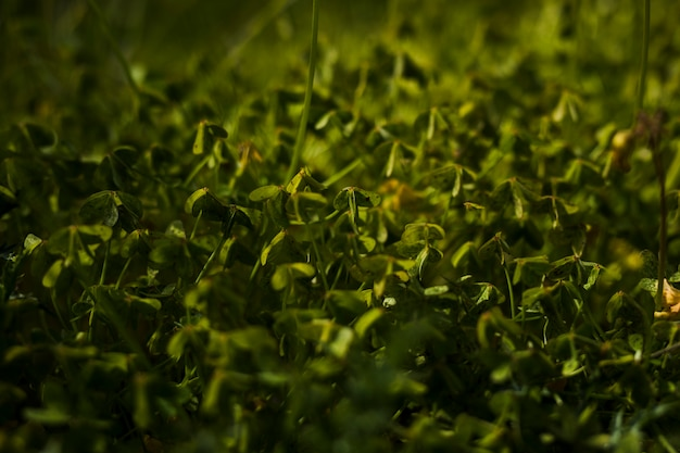 Widok zielonych liści w tle