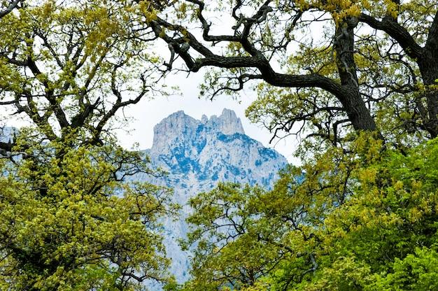 Widok zza krzaków i drzew wysokiej góry
