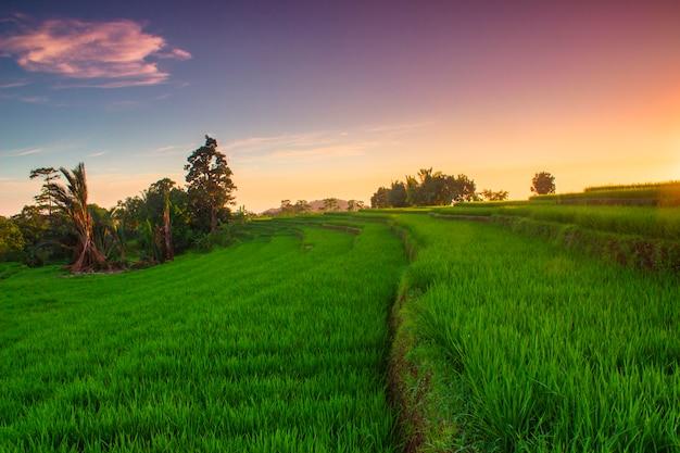Widoki na tarasy ryżowe i niebo o zachodzie słońca w indonezji