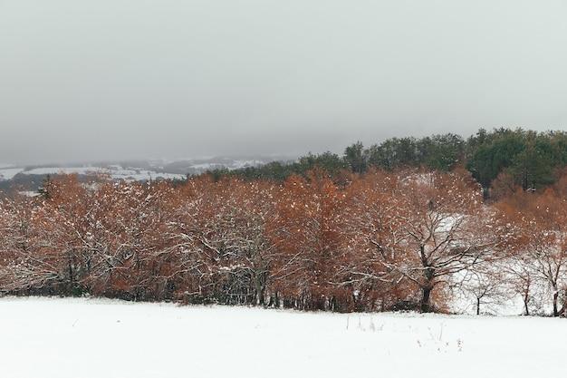 Widoki zaśnieżonego lasu jesienią. jesienny krajobraz po śniegu. jesienna scena z polem pełnym śniegu w dozon, pontevedra, hiszpania.