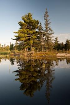 Wiecznie zielone drzewa wzdłuż linii brzegowej w lake of woods, ontario
